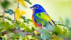 Colorfull bird (hansde) Tags: postcard colour color bird romantic animal nature fauna collor nice bautifull