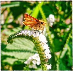 Cores da natureza. #flores #flowers #borboletas #naturalbeauty #natureza #naturephotography #jardim #floreslindas #revistaxapury #eunotg #criacaodedeus #obradivina #instaflowers #instaflores #motox2 #instamotox2 #garden #floricultura #intagram #instalike (ederrabello2014) Tags: naturalbeauty naturephotography instalike flores jardim butterflys motox2 intagrambrasil garden flowersbouquet revistaxapury borboletas flowerslovers instaflores eunotg floricultura instamotox2 flowerstagram natureza floreslindas instaflowers criacaodedeus intagram obradivina flowersofinstagram flowers