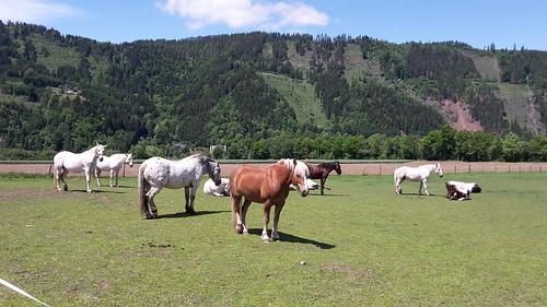 pferde schladnitzdorf