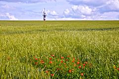 Antenne basse (JDAMI) Tags: antenne champs céréales blé coquelicots fleurs flore ciel nuages dury somme 80 picardie hautsdefrance france vert verdure nikon d600 tamron 2470