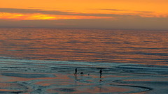 Playing silhouettes (KerKaya) Tags: silhouette evening seascape sunset sky beach beauty three 3 kerkaya reflections france nature normandy landscape light lowtide dog two clouds sand silhouettes orange blue colors colours