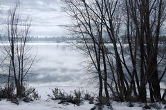Winter at the Lake (Utah Images - Douglas Pulsipher) Tags: winter lake snow snowy cold frost chilly frosty clouds cloudy moody overcast lonely alone tree trees shoreline banks water reflection monotone gloomy grayday pineviewreservoir ogdenvalley wasatchmountains huntsvilleutah ut