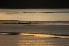 Fisherman (Besim_Hakramaj) Tags: fisherman boat lake montenegro sunset scutari skadar