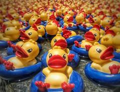 Resting Ducks (Mexico City, Mexico. Gustavo Thomas © 2017) (Gustavo Thomas) Tags: patitos ducks resting descanso art installation colour yellow funny cute shoppingmall arte instalación antara polanco mexicocity mexico multitude