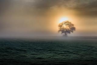 Misty Tree in Paddock