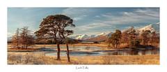 Loch Tulla (Paul Cronin 1) Tags: lochtulla trees leefilter scotland canon5ds highlands landscapephotography glencoe pines winter rannoch moor frost ngc