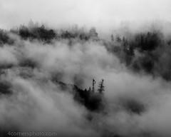 Fog and Cliff, Yosemite National Park (4 Corners Photo) Tags: 4cornersphoto blackandwhite california cliff clouds fog forest landscape mariposacounty monochrome mountains northamerica rain rural scenery sierranevada sky snow spring storm tree unitedstates weather yosemitenationalpark us