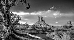 Monument Valley Cedar (Spence Fairbanks) Tags: monumentvalley arizona skancheli goldcollection