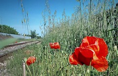 Lungo la ferrovia... (Steclick187) Tags: papaveri binari erba aperto natura cielo terra attimo