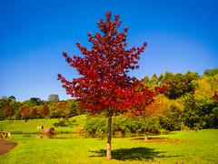 Árvore no Parque Tanguá (Eduardo PA) Tags: curitiba paraná nokia pureview microsoft windows phone 950xl lumia wp árvore no parque tanguá