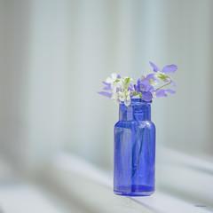Petite Violas (jm atkinson) Tags: bokehwednesday 7dwf macro blue bottle window violets tiny 105mm d700 flowers fresh