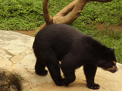 Urso (Mari-Martins) Tags: urso zoodesp brasil