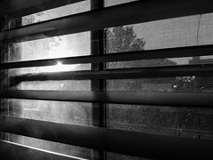 12\365 Late Afternoon Sun (daveparker) Tags: sun afternoon summer heat window bw dave parker tracy california usa