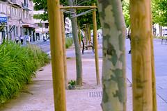 _DSF5867 (ad_n61) Tags: paris perro primavera verano invierno zaragoza 2017 mayo flor rosa roja amarilla blanco aveja avispa gente parque grande cielo estrella star wars dog spring summer winter flower pink red yellow white bee wasp people park big sky fujifilm xt1 fujinon super ebc xf 18135mm 13556 ois wr