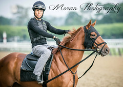 Englehart Trainee (EASY GOER) Tags: horse racing equine sports thoroughbred canon5dmarkiii belmontpark races racetrack thoroughbreds newyorkhorseracing sportofkings canon 5d mark iii track horseracing horses ny athletes newyorkstate 5dmarkiii