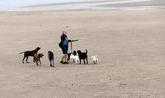 Acitvity on Portobello beach (scrappy annie) Tags: dogwalker port portobello portobellobeach scotland beach seaside