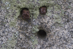 Oh! (brucetopher) Tags: macromondays pareidolia macro monday mondays rock face eyes oh mouth round surprised drill bore