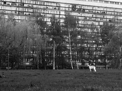 untitled (gregor.zukowski) Tags: warsaw warszawa street streetphoto streetphotography peopleinthecity blackandwhite blackandwhitestreetphotography bw urban geometry dog architecture fujifilm