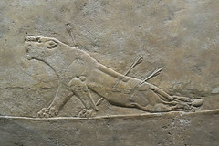 May 10: 80 Lion Hunt Reliefs (Aquafortis) Tags: art london england museums assyrian