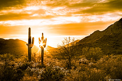 Arizona Landscape (Ken Mickel) Tags: arizona buckeye buckhorncholla cacti cactus cholla clouds cloudy desert landscape landscapedesert outdoors plants saguaro skylineregionalpark sunsets topaz topazclarity topazdetail nature photography sunset