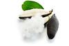 Kapok fibre (2day929) Tags: asia cotton fiber fibre fresh fruit kapok leaf light natural organic pale pods pure ripe seed short silk silky stuffing textile tree warm white 木棉花 木棉