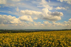 Field of Gold under a Cotton Wool Sky (Jay Bees Pics) Tags: field sky peakdistrict nationalpark landscape 2017 rapeseed magicunicornverybest sunrays5