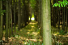 20170527-IMG_5578 (Wo Ai Pai) Tags: 6d ef100mm f28l macro shanghai canon is usm 上海 公園 森林 濕地 綠蔭 郊野公園
