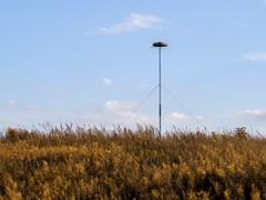 Auenlandschaft Hohenrode-Oktober (34)