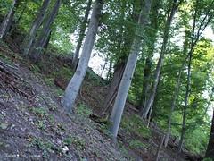 Miroslavac trail 5