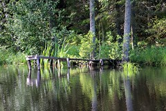 Jetty (carina.ericsson) Tags: jetty water reflection tree forest magnehultsån magnehultstream rejmyre sweden