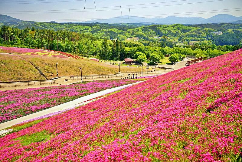 平田村芝櫻山好美(1)