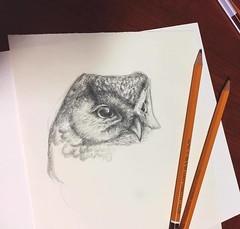 (rabarbar.x) Tags: owl kohinoor sketch