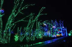 15 Trees (megatti) Tags: buckscounty christmas christmaslights pa pennsylvania shadybrookfarm trees yardley