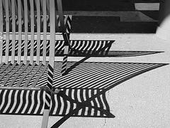 Porto - Metro (CarlosCoutinho) Tags: eduardosoutodemoura pritzkerprize subwaystation casadamúsica portugal porto oporto carloscoutinho architecture architectur arquitectura arquitetura blackwhite bench shadows