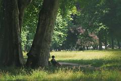 Untere Schlossanlagen (Pe Wi) Tags: schlossanlagen spaziergang stuttgart hitze platanen natur eis essen getränke gutelaune sonnentag