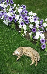 Sleeping Beauty (Jeren N Turoonju) Tags: cat flowers nature positive positivity nofilter