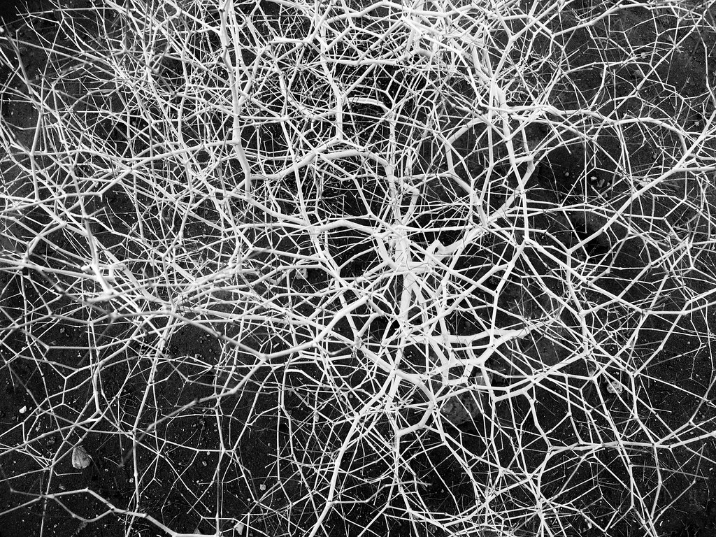 white paper on artificial neural network The most downloaded articles from neural networks in improved system identification using artificial neural networks and analysis neural network for.