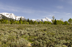 Granite Canyon Area (rschnaible) Tags: grand teton national park wyoming west western us usa landscape granite canyon sage mountains rugged snow cap