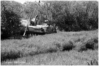 Resting 2642 - Finn Slough XT4522e