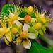 Macro I (Txantxiku) Tags: afc santacatalina jardinbotanico naturaleza