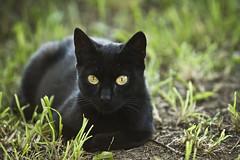 Skeleton the cat (Bucka Stone) Tags: buckastone skeleton cat animal canon eyes grass