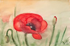 Poppy (ju-friedrich) Tags: watercolor watercolour aquarell moihn