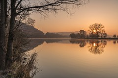 *Golden sunrise at the Moselle* (Albert Wirtz @ Landscape and Nature Photography) Tags: river water landscape tree mosel moseltal moselle moselsteig wandern hiking trail travelling reisen trier ehrang schweich quint trierquint rheinlandpfalz rhinelandpalatinate deutschland germany sonnenaufgang sunrise goldensunrise goldenestunde spiegelung reflections waterreflections greatphotographers greaterphotographers goldensunriseatthemoselle reflejos riflessi reflexos reflexions