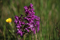 Wildblume (Hugo von Schreck) Tags: hugovonschreck wildblume flower wildflower blume blüte macro makro canoneos5dsr tamron28300mmf3563divcpzda010