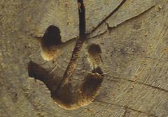 "Macro Monday:  ""Pareidolia."" (Hayseed52) Tags: ""pareidolia"" oakboard board oak macromonday face smiling cracked"