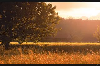 Rural harmony and romance