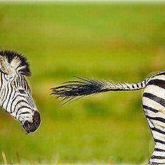 34198587873_b1a705fe45.jpg (amwtony) Tags: heathrowgatwickcarscom instagram burchells zebra stallion chasing rival rietvlei nature reserve south africa burchellszebra rietvleinaturereserve southafrica birds animals 3416271931473480c3944jpg 348740194214acf33bf8fjpg 348741444715bb549d161jpg 34196111473605b74f684jpg 34966651426282103e132jpg 34196373193a4d3bc2783jpg 34966890456a934aaf174jpg 346196663703255cb786ejpg 349671543868b4cfcf565jpg 34619883930a5904ca31ejpg 3461999787060cc3350fejpg 34620136360e93aab1f28jpg 34197210993311a8cabcfjpg 34875475641f681b32578jpg 34164363064fa5808c960jpg 349681580865e1559ac4bjpg 35008463565c0065c829ejpg 346210011603dbb94c863jpg 34621103140eed6eacd29jpg 3500879163565c5831948jpg 341651542746c604c2f62jpg 34876678941690d887dabjpg 34621594290a908976783jpg