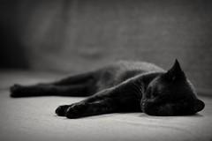 Cats (A_M_J) Tags: cats cat catmoments kitten kittens blackcat beautiful pet gorgeous black