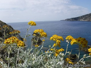Porquerolles Island- South -Loup to Indienne (31)