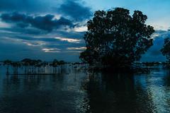 Mangroven - Mangroves in Wok Tum - Koh Phangan (Jutta M. Jenning) Tags: baum blaetter blatt baeume landschaft natur see wasser spiegelung stimmungsbild landsape water blauestunde blue mangroven nature blau himmel asien asia thailand woktum mangroves eos70d kohphangan insel island reflections evening abend meer ocean tropical tropen wolken clouds